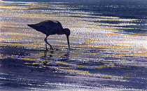 Silhouette�Dowitcher by Joe Garcia Watercolor ~ 4.25 x 7