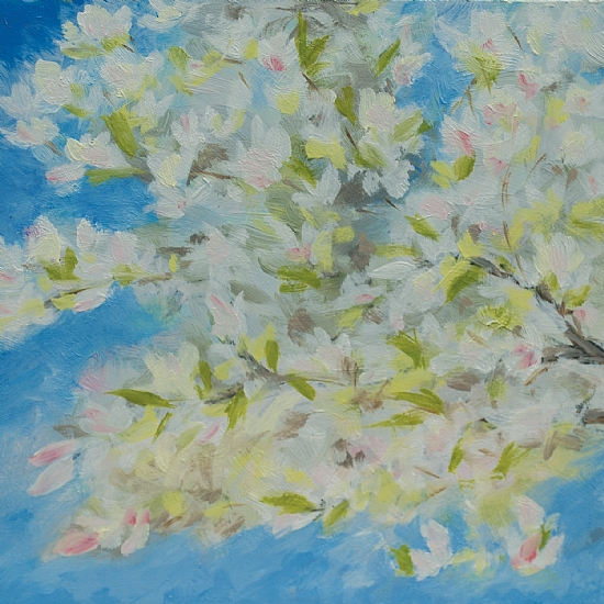Plum Blossoms - Oil
