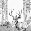 High Country Buck