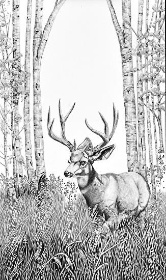 High Country Buck - Pencil