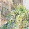 Palms and Shutters