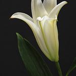 Carol Wontkowski - Bloomin'