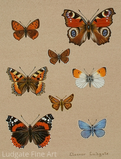 British Butterflies - Watercolor