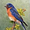 Brentwood Bluebird