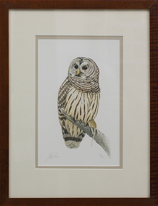 Barred Owl (from