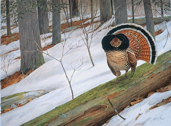 Early Thaw --  Ruffed Grouse by James Coe Offset print ~  x