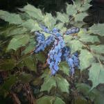 Laurel Daniel - Davis Gallery Group Show - Flora and Fauna