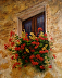 Tuscany Floral by colleen gallo