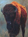 Bison Bull by  Oklahoma Lady Artists Oil ~ 24 x 18