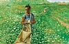 "Cotton Field by Robert Casilla Limited Edition Print ~ 15"" x 10"