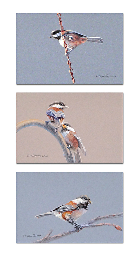 """Chickadee Triptych #1"" - Colored Pencil"