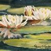 White waterlilies