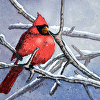 Puffy Cardinal in a Tree