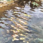 Spencer Meagher - Casein Painting - Eureka Springs, AR - Online