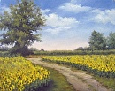 Sunflower Fields by Claire Beadon Carnell Oil ~  x