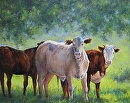 Curious Cows by Claire Beadon Carnell Oil ~  x