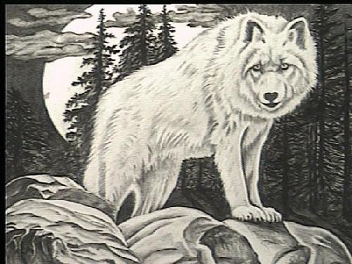 grey wolf essay