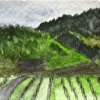 California Painting, Chateau St Jean, Sonoma Valley, Watercolor 14-1