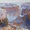"""Aoudad Sheep in Sorenson Canyon"""