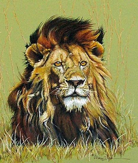 Old Warrior, African Lion by Mary Dove Oil Pastel Painting ~ 26 x 22