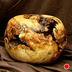 38113 Rendezvous West Cottonwood Burl Hollow Vessel by Deborah & Russell Shamah Wood ~  x 10 1/4""