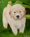 """Golden Retriever Puppy on the Lawn Oil Painting by Northern California Artist Mark Webster by Mark Webster Oil ~ 10"""" x 8"""""""
