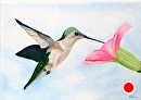 """Daily Painters Blog - Hummingbird with Morning Glory Oil Painting by Mark Webster Oil ~ 5"""" x 7"""""""