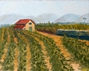 """Vineyard Oil Painting by Northern California Artist Mark Webster by Mark Webster Oil ~ 8"""" x 10"""""""