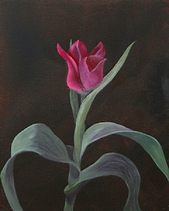 "Untitled Flower Oil Painting by Northern California Artist Mark Webster by Mark Webster Oil ~ 10"" x 8"""