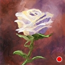 "Mark Webster - White Rose Study Oil Painting by Mark Webster Oil ~ 6"" x 6"""