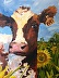 Paradise Springs Farm Cheddar by Alice Grant