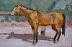 "Buckskin by Vcevy Strekalovsky Oil ~ 12"" x 16"""