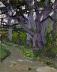 """Cypress Grove by Vcevy Strekalovsky Oil ~ 10"""" x 8"""""""