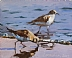 "Plovers by Vcevy Strekalovsky Oil ~ 6"" x 8"""