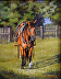 Bruno by Kathryn Leitner Pastel Pencil ~ 14 x 11