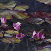 Water Lily, #29
