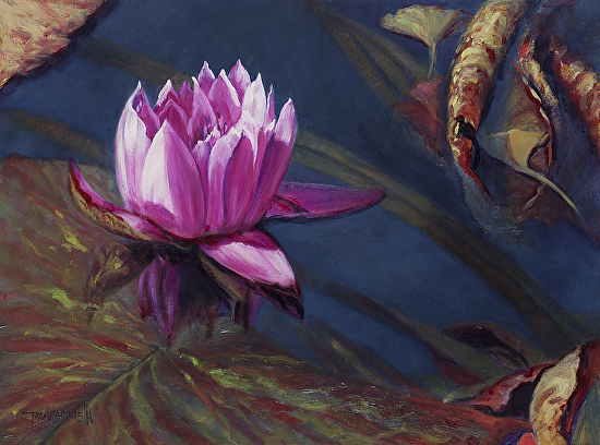 Water Lily, -
