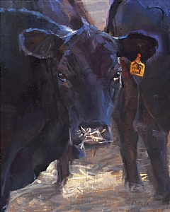Black Angus: In the Shade by Daria Shachmut Oil ~ 20 x 16