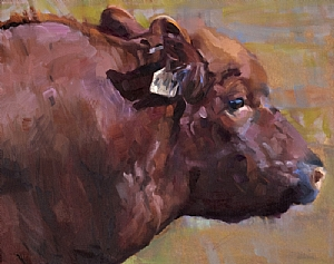 Red Angus:  Bull by Daria Shachmut Oil ~ 16 x 20
