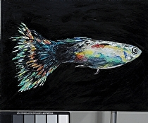 "Tropical Fancy Guppy by John Bunker Acrylic ~ 22"" x 30"""