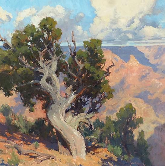 Canyon Native - Oil