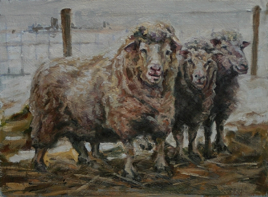"Three Amigos by Kelly Sullivan Oil ~ 12"" x 16"""