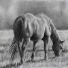 "Original Pencil Horse Drawing ""Spring Grass"""