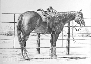 "Horse Pencil Drawing ""Ready For Work"" by Lorrie Beck Pencil ~ 10 x 15"