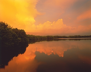 Everglades (Color)