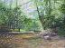 Whispering Woods by Sandy Askey-Adams