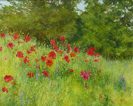 Poppies at Inglewood - Oil