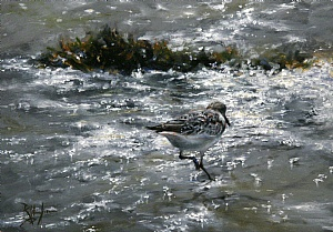 "Sanderling Running by Ralph Grady James Oil ~ 10"" x 14"""