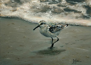 "Sanderling by Ralph Grady James Oil ~ 9"" x 12"""