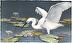In Search Of... (Snowy Egret) by Barbara Groenteman